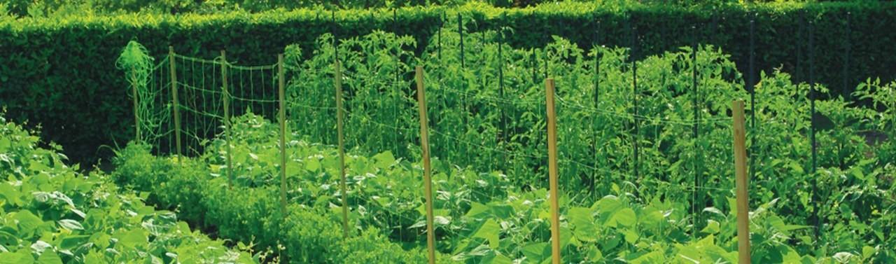 Plase plante cataratoare