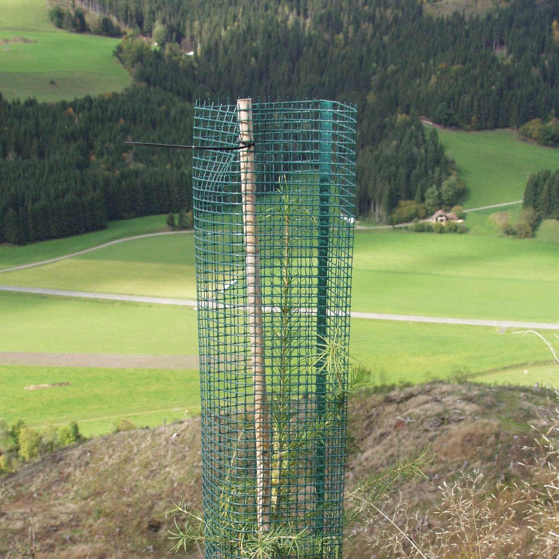 Invelitoare de protectie conifere Freiwuchs