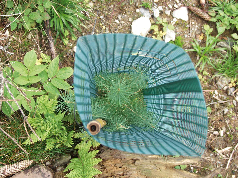 Invelitoarea protectie conifere Freiwuchs 300
