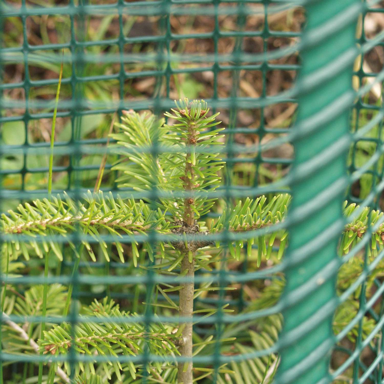 Invelitoare protectie conifere Freiwuchs 500