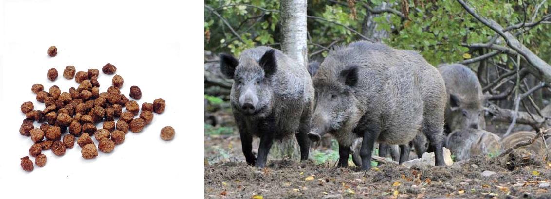 Solutia contra porcilor mistreti